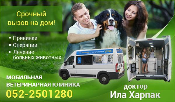 Ветеринар в Израиле Ила Харпак. Срочная ветеринарная помощь в Израиле. Вызов ветеринара на дом в Израиле.
