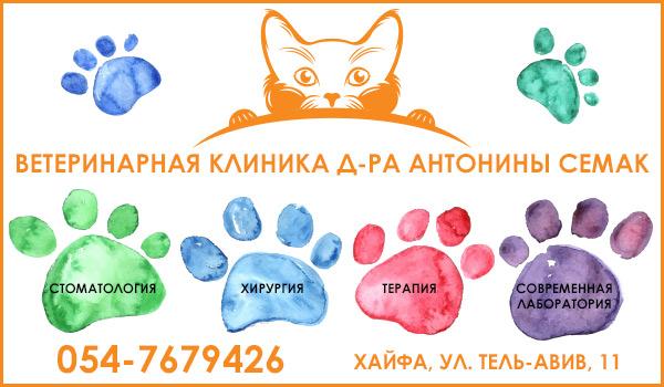 Ветеринарная клиника в Хайфе д-ра Антонины Семак. Ветеринар в Хайфе. Стрижка собак и кошек в Хайфе.