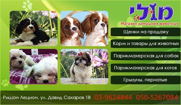 Зоомагазин в Ришон ле-Ционе. Парикмахерская для собак в Ришон ле-Ционе. Корм для животных в Ришон ле-Ционе.