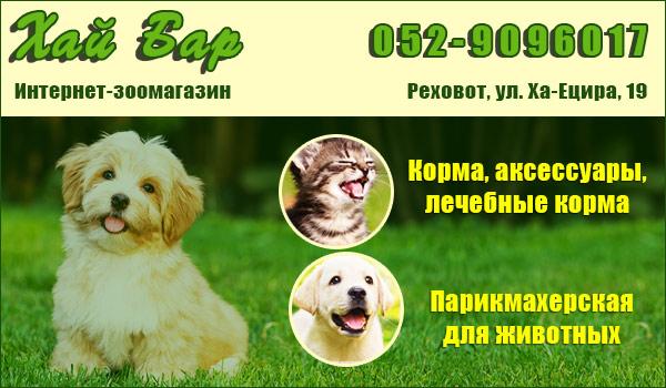 Зоомагазин в Реховоте. Корм для кошек в Реховоте. Корм для собак в Реховоте. Парикмахерская для кошек и собак в Реховоте.