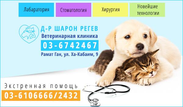 Ветеринарная клиника в Рамат-Гане. Ветеринар в Рамат-Гане. Экстренная помощь ветеринара в центре страны. Ветеринар 24 часа в Израиле. Ветеринар в Тель-Авиве.