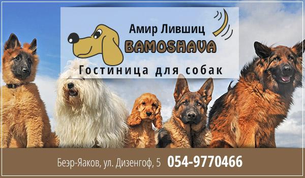 Гостиница для собак в Израиле. Пансион для собак в центре страны. Гостиница для собак в Ришон ле-Ционе. Питомник для собак в Израиле.