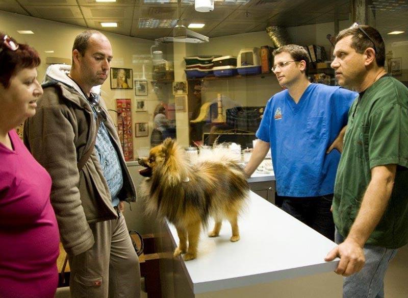 Ветеринарная клиника д-ра Шарона Регева: квалифицированная помощь домашним питомцам.