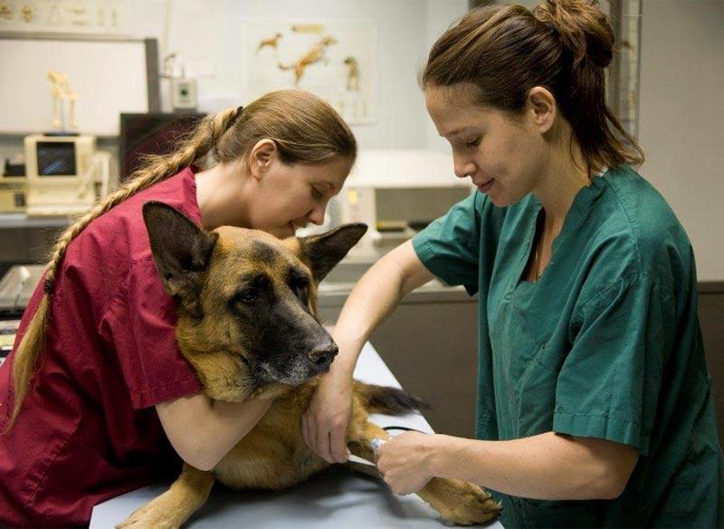 Ветеринарная клиника д-ра Шарона Регева: квалифицированная помощь Вашим домашним питомцам!