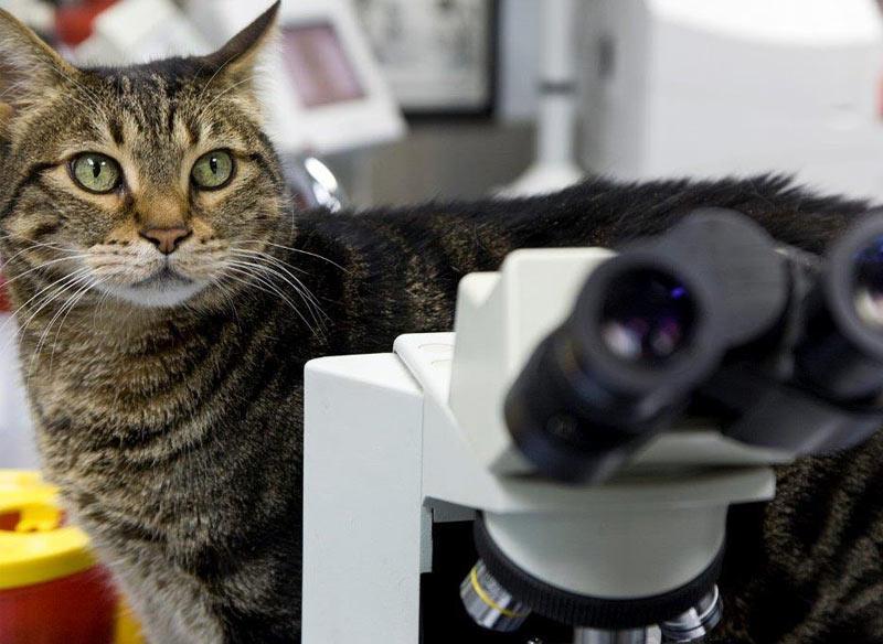 Мы проводим диагностику с использованием УЗИ, цифрового рентгена, эндоскопа, отоскопа.