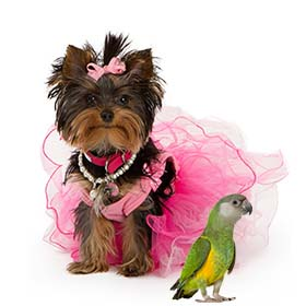 Ветеринар в Петах Тикве. Парикмахерская для животных в Петах Тикве.