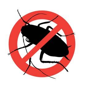 Уничтожение вредителей и насекомых в центре Израиля – Адбарот Йорам. Ресус в центре Израиля