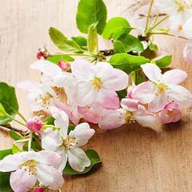 """""""Цветы Ава"""" - магазин цветов в Беэр-Шеве. Доставка цветов в Беэр-Шеве. Букеты невест в Беэр-Шеве."""