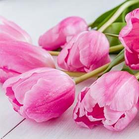 Цветы в Герцлии. Доставка цветов в Нетании. Доставка цветов в Тель-Авиве. Доставка цветов в Раанане.