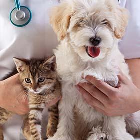 Ветеринарная клиника в Ришон ле-Ционе. Ветеринар в Ришон ле-Ционе. Ветеринарная больница в Ришон ле-Ционе. Ветеринарная клиника в Израиле. Ветеринары в Израиле.