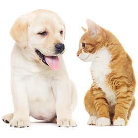 Ветеринар в Ашдоде. Ветеринарная клиника в Ашдоде. Ветеринары Ашдода. Корм для кошек и собак в Ашдоде.