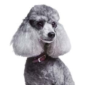 Парикмахерская для собак в Петах Тикве, стрижка собак в Петах Тикве.